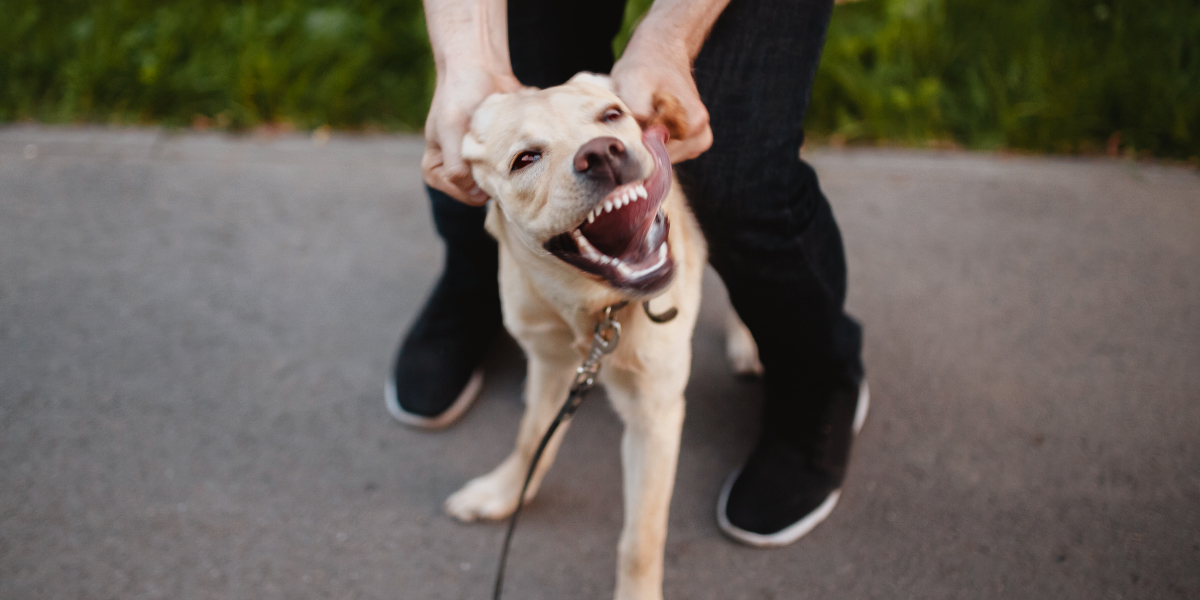 What are the signs and symptoms of Rabies?